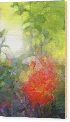 Rose 190 Wood Print by Pamela Cooper
