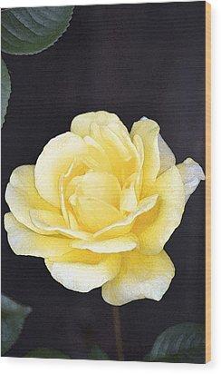 Rose 196 Wood Print by Pamela Cooper