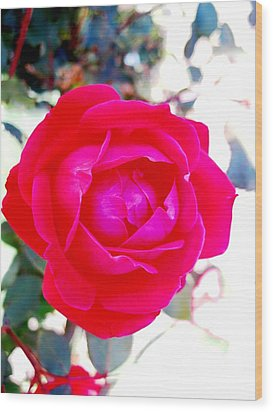 Rose 2 Wood Print by Will Boutin Photos