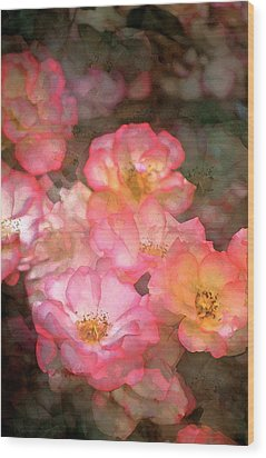 Rose 212 Wood Print by Pamela Cooper