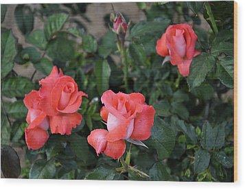 Rose 3 Wood Print