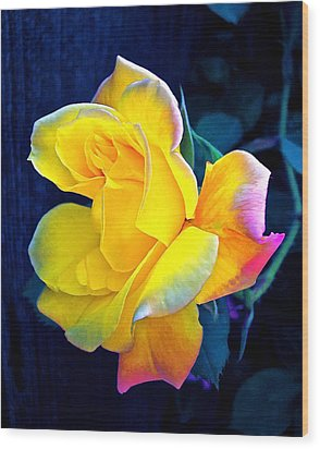 Wood Print featuring the photograph Rose 4 by Pamela Cooper