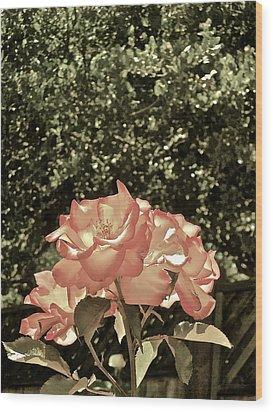 Rose 55 Wood Print by Pamela Cooper