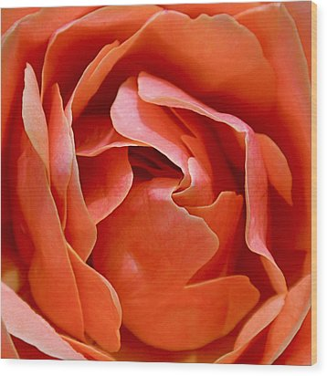 Rose Abstract Wood Print