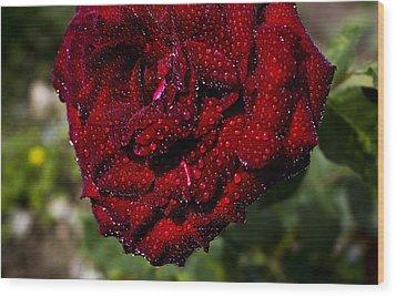 Rose And Dew Wood Print by Vishal Kumar