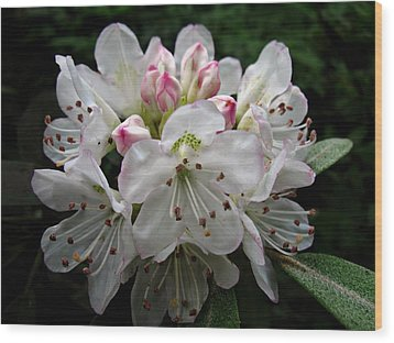 Wood Print featuring the photograph Rose Bay Rhododendron by William Tanneberger