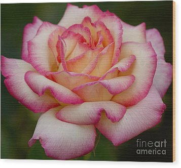 Wood Print featuring the photograph Rose Beauty by Debby Pueschel
