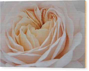 Wood Print featuring the photograph Rose Blush by Sabine Edrissi