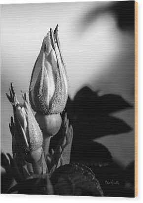 Rose Bud Wood Print by Bob Orsillo