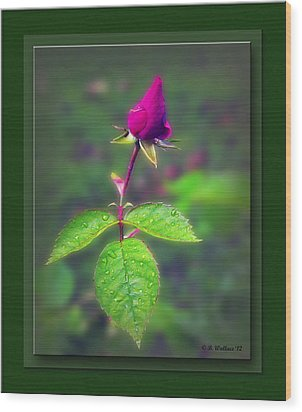 Rose Bud Wood Print by Brian Wallace