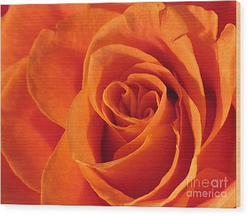 Wood Print featuring the photograph Rose Close Up by Art Photography