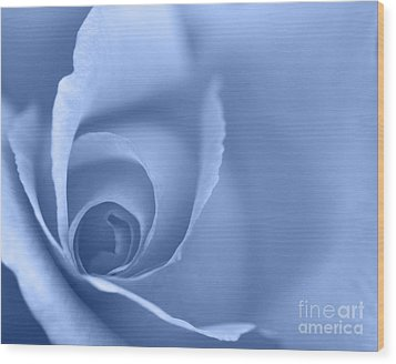 Rose Close Up - Blue Wood Print by Natalie Kinnear