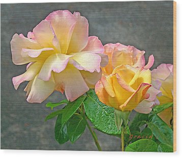 Rose Delight  Wood Print by Gracia  Molloy