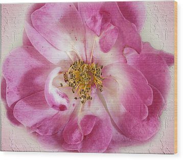 Rose Wood Print by Elaine Teague