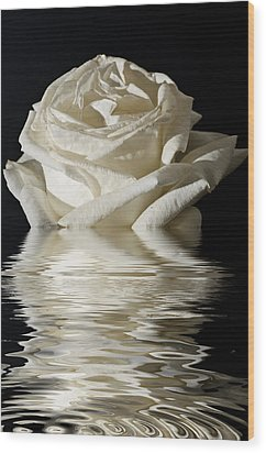 Rose Flood Wood Print by Steve Purnell