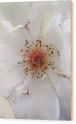 Rose Flower Wood Print by Joyce Woodhouse