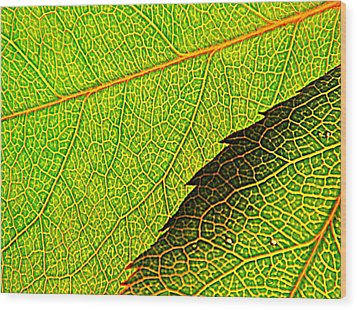 Rose Foliage Number Two Wood Print by Chris Berry
