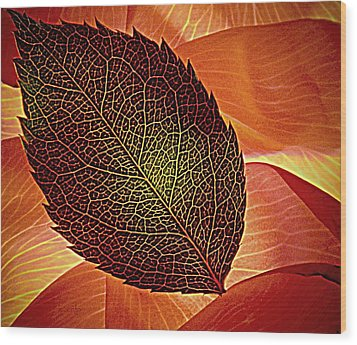 Rose Foliage On Rose Petals Wood Print by Chris Berry