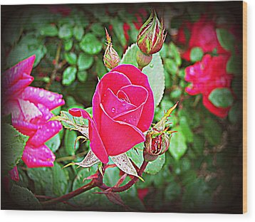 Rose Garden Centerpiece 2 Wood Print