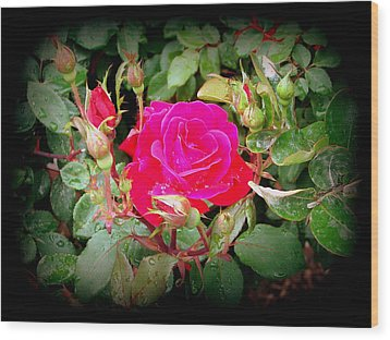 Rose Garden Centerpiece Wood Print