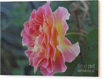 Rose Garden Wood Print by Garnett  Jaeger