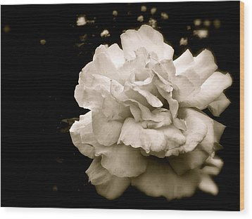 Rose I Wood Print by Kim Pippinger