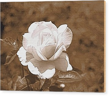 Rose In Sepia Wood Print by Victoria Sheldon