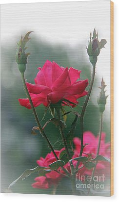 Rose In The Fogg Wood Print by Yumi Johnson
