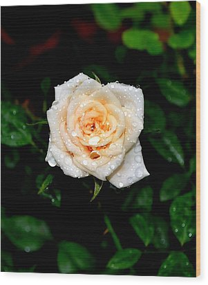 Wood Print featuring the photograph Rose In The Rain by Deena Stoddard