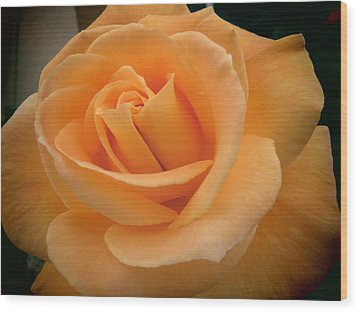 Wood Print featuring the photograph Rose by Laurel Powell