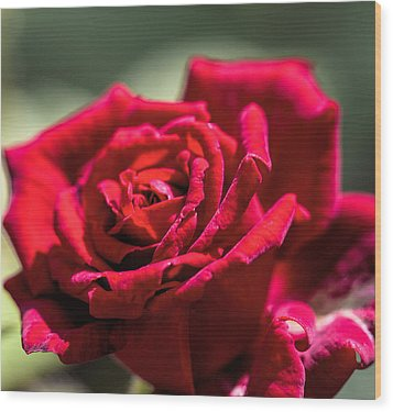 Wood Print featuring the photograph Rose by Leif Sohlman
