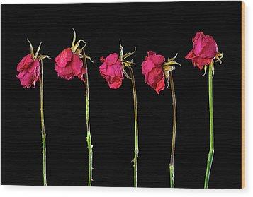 Rose Lineup Wood Print by Mauro Celotti