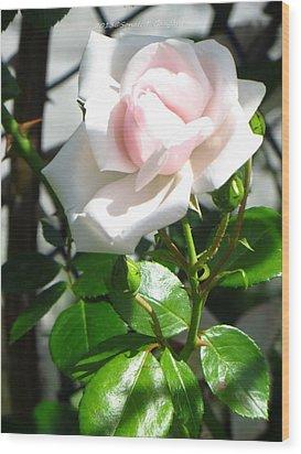 Rose Named Pearl Wood Print by Sonali Gangane