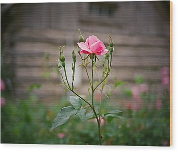 Rose Of Independence Wood Print by Linda Unger