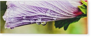 Wood Print featuring the photograph Rose Of Sharon by Cathy Donohoue