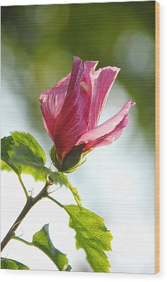 Wood Print featuring the photograph Rose Of Sharon by Susan D Moody