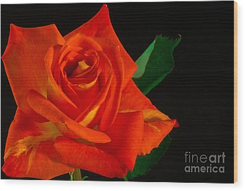 Wood Print featuring the photograph Rose On Fire by Art Barker