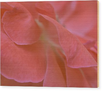 Wood Print featuring the photograph Rose Petals by Stephen Anderson