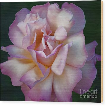 Rose Petals Straight From My Heart Wood Print by Gwyn Newcombe