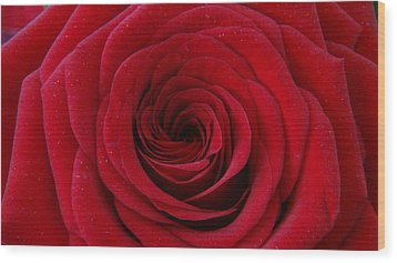 Wood Print featuring the photograph Rose Red by Shawn Marlow