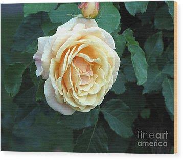 Rose Ros Wood Print by Yury Bashkin