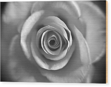 Rose Spiral 4 Wood Print by Kim Lagerhem