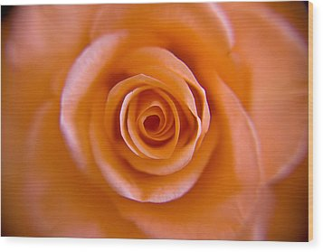Rose Spiral Wood Print by Kim Lagerhem