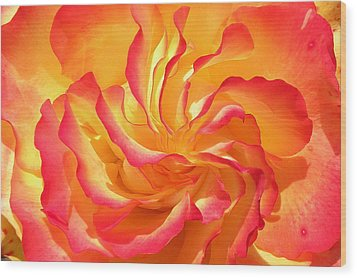 Rose Swirl Wood Print by Brian Chase