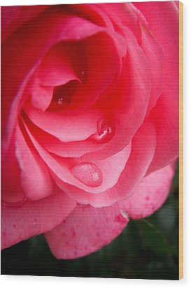 Wood Print featuring the photograph Rose Teardrop by Dawn Romine