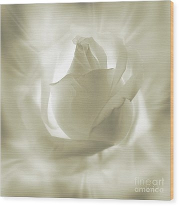 Rose With Glow Wood Print by Johnny Hildingsson