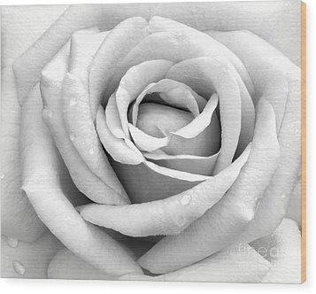 Rose With Tears Wood Print by Sabrina L Ryan