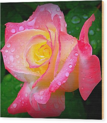 Rose With Water Droplets  Wood Print