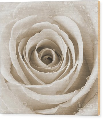 Rose With Water Droplets - Sepia Wood Print by Natalie Kinnear