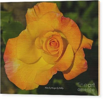 Wood Print featuring the photograph Rose Yellow Red by Debby Pueschel